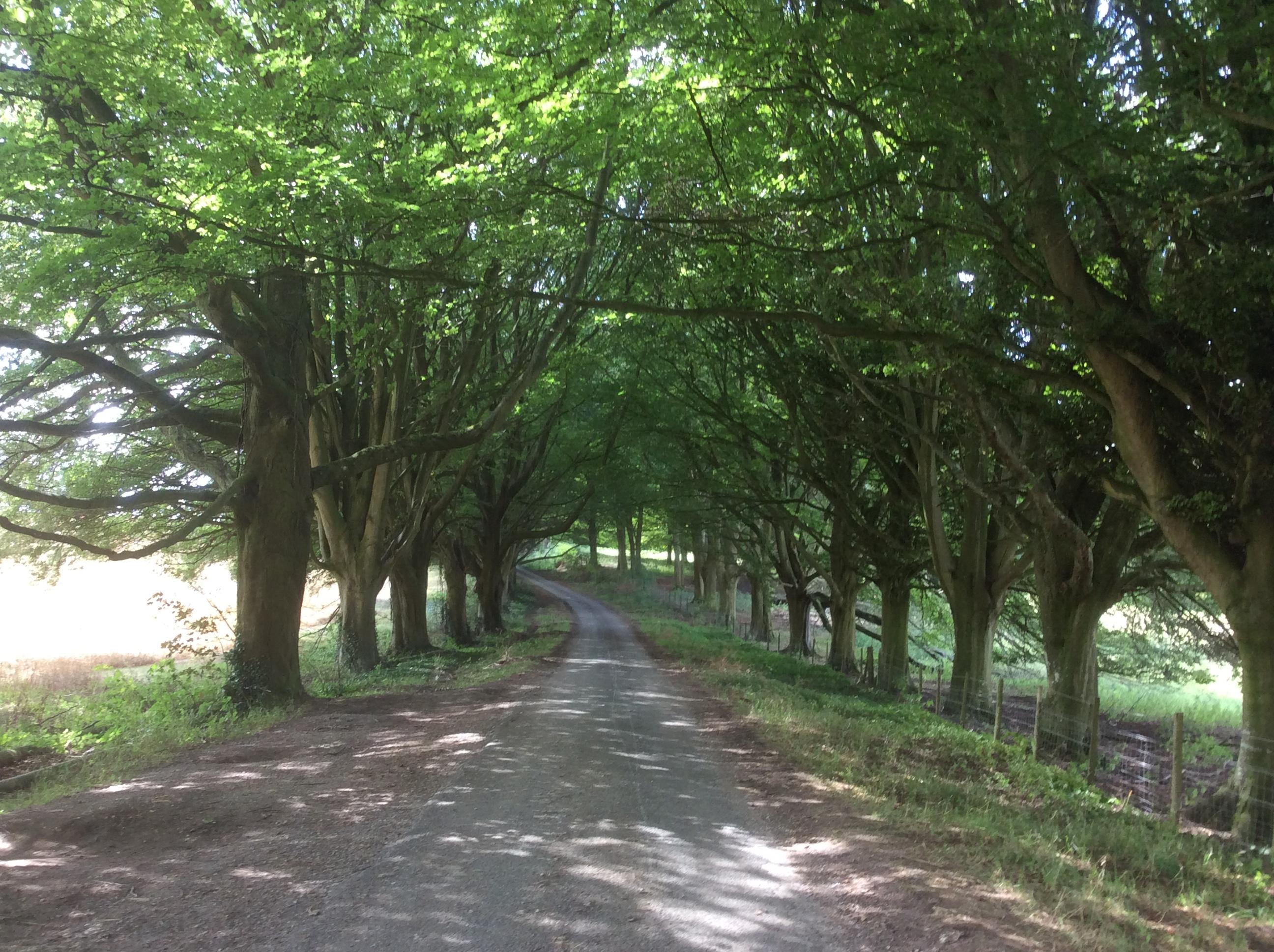 Hinton walk 140818 6